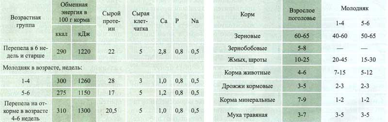 Рецепт комбикорма для перепёлов своими руками 636